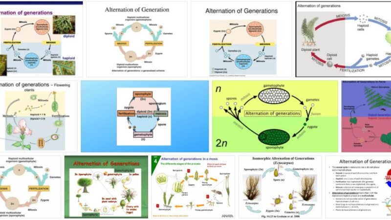 Meaning of Alternation